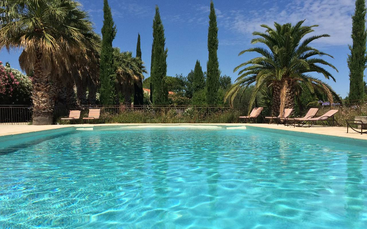provencale swimming pool with cypress and palm trees