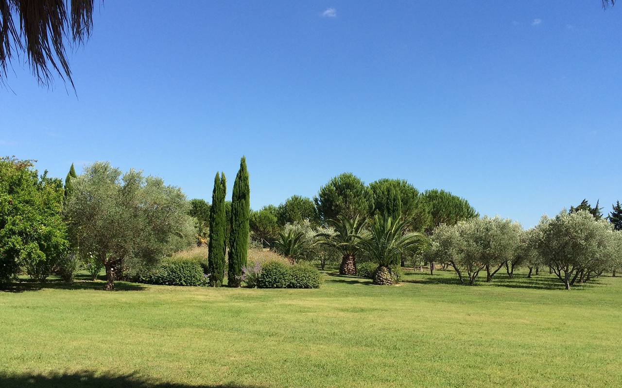 luxuriant park with olive trees and cypress